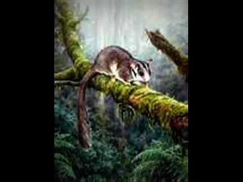 Possum's Last Dance - Blackmore's Night
