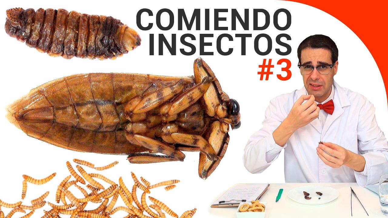 insecto gusano de fuego