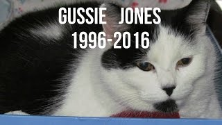 In Memory of Gussie
