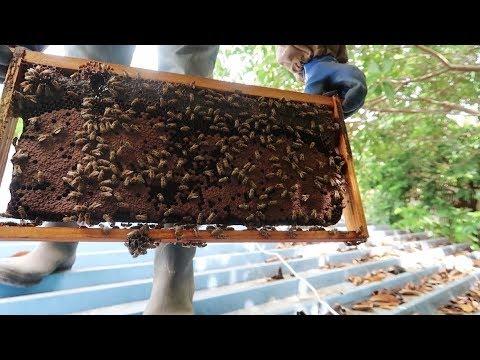 Getting stung for honey money   Jamaica Vlog #75