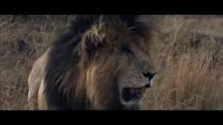 Gambar cover Wium Dornbrack - Widlife Cinematography Showreel - Kenya Masaai Mara 2018