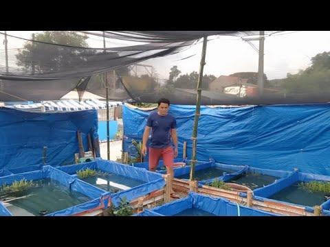 Earn Extra Income In Ornamental Fish Farming!