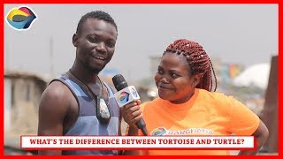 What's the Difference Between TORTOISE and TURTLE? Street Quiz | Funny African Videos | Funny Videos