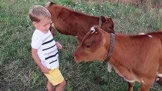 ПРИКОЛ! Городские дети разговаривают с коровой!