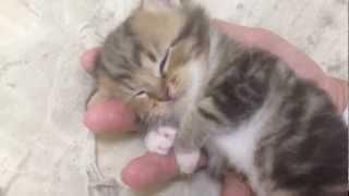 手の上でスヤスヤ… 気持ち良さそうに眠る赤ちゃん猫にキュンッ