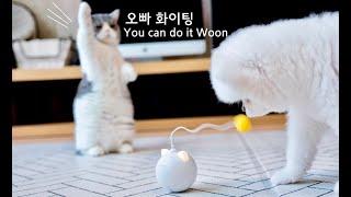 petlog 24 - 새로운 장난감을 대하는 개와 고양이의 온도차이 feat 대장금파크(BTS Suga '대취타' M/V 촬영지), 그랜드하얏트서울 풀사이드바베큐