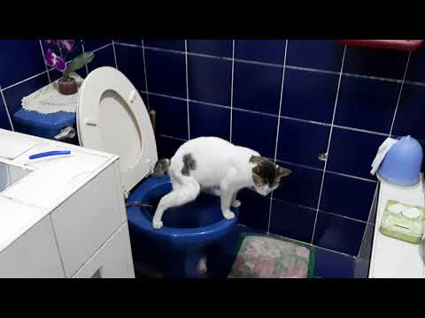 Miming Puninay the Cat using the toilet Bowl