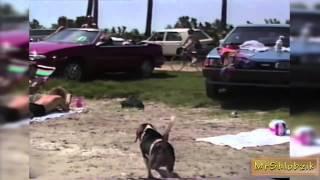 Смешные животные! Самые смешные приколы с ЖИВОТНЫМИ/ FUNNY DOGs. DOG Fail Compilation 2013/2014