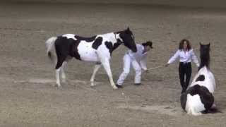 Tommie Turvey Liberty Horse Act - Night of the Horse 2015 - Del Mar National Horse Show