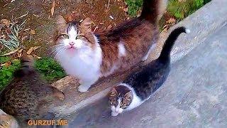 Гурзуф : коты и кошки : Крым