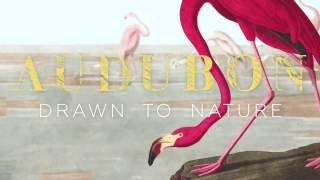 Audubon: Drawn to Nature Trailer
