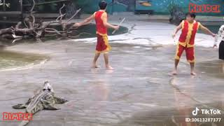 Funny video crocodile zoo 2018 #shortfunny