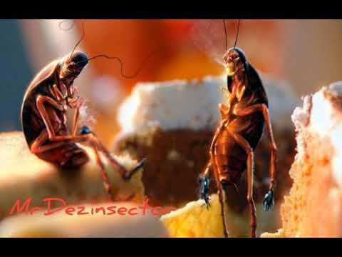Заговор от тараканов ☠️🐜🙏