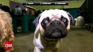CNET TV: High Tech Doggy Day-Care - DogVacay.com