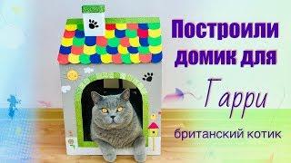 ПОСТРОИЛИ ДОМ ИЗ КОРОБКИ для КОТА Гарри / British cat