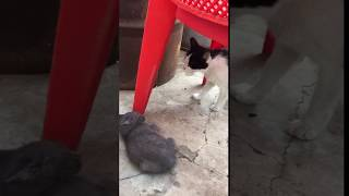 Кошка не принимает котёнка УКУСИЛА