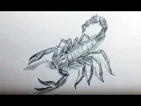 How To Draw An Scorpion Como Dibujar Un Escorpión Youtube