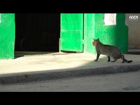 Havana - Cats in Socialist Cuba