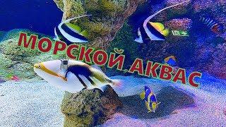 Морской аквариум в Литве. Аквариумы. Огромные аквариумы по размеру