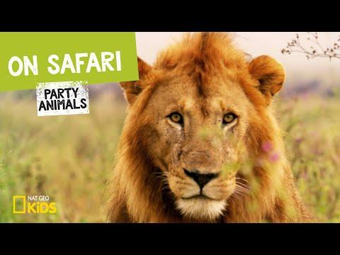 On Safari | Party Animals