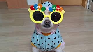 #강아지 패션 #강아지 선글라스 #멋진 강아지