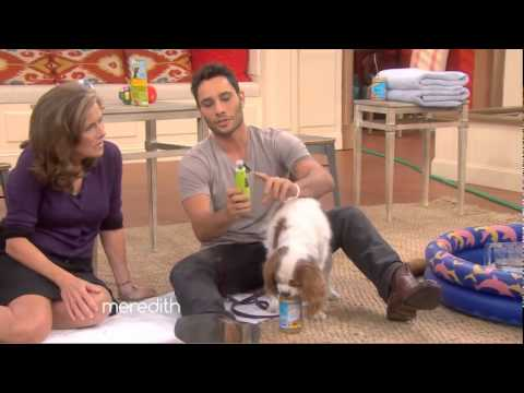 Dog grooming, teeth brushing, nail clipping, bathing made easy with Justin Silver