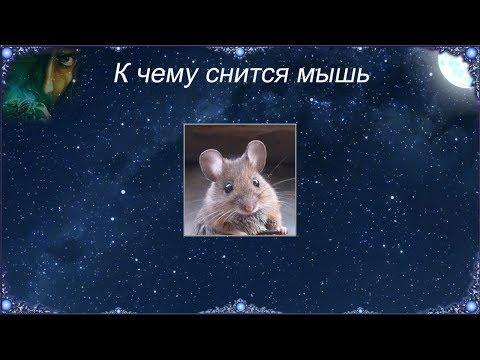 Нередко мыши во сне сигнализируют о том, чтобы сновидец избегал неловких и неоднозначных ситуаций.