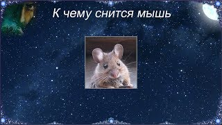 К чему снится Мышь (Сонник)