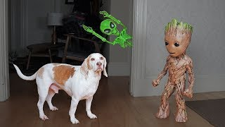 Groot Saves Dogs from Alien Skeleton! Funny Dogs Maymo & Potpie