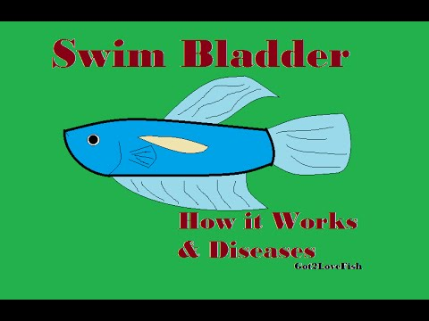 Swim Bladders In Fish