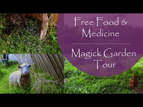 Wild Witch Garden Tour || Green Plant Magic & We Have A SHEEP!