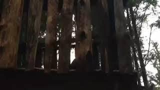 Помойка в лесу ! Видимо фильм удался. Вятиккя Терву Койонсаари Куркиеки
