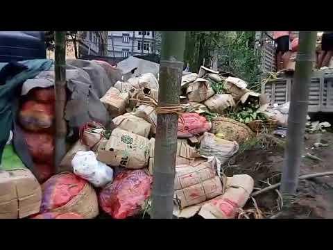 Stupid Organic state Sikkim| Non Organic food buried in Sikkim