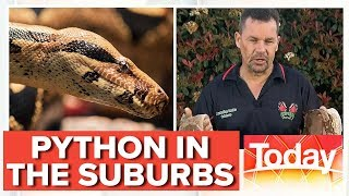 There's a python on the loose in Sydney | Today Show Australia