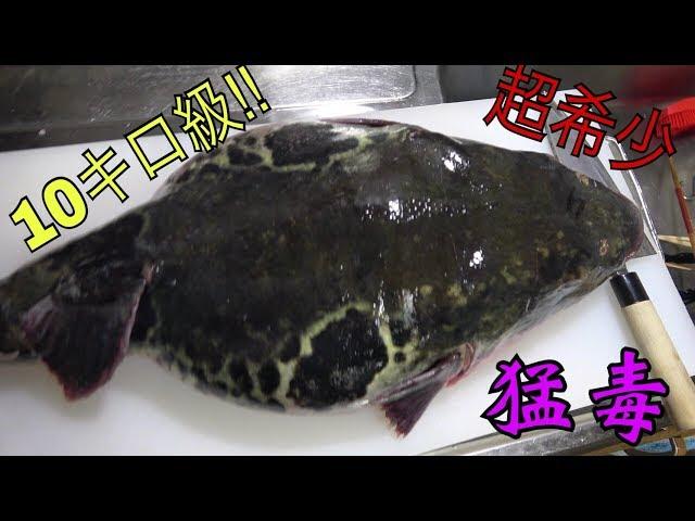 【希少映像】巨大トラフグさばいてみた!【10キロ級】Big Poison Puffer 毒药河豚吃