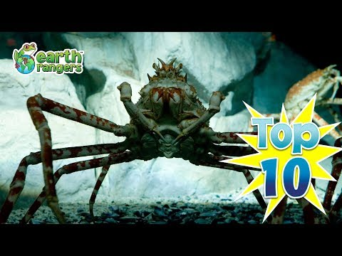 Top 10: Big Scary Looking Animals