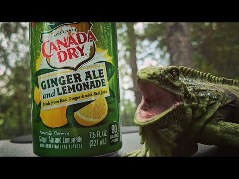 Soda Review: Canada Dry - Ginger Ale And Lemonade Review