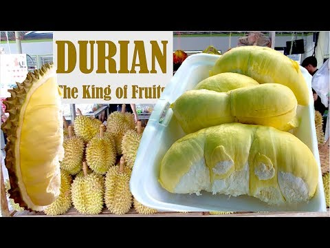 Durians the King of Fruits in The World | Natural Organic Fruits from Cambodia in Southeast Asia