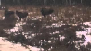 Управление охраны и использования животного мира Кировской области