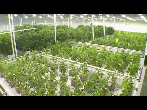 Minnesota's Medical Marijuana Program Off To Rocky Start