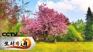 《生财有道》 20190429 咱们家乡春天美 浙江宁海:财美双收的春天味道| CCTV财经