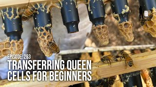 Transferring Queen Cells & H๐w to Make a Queen Bee: Queen Rearing Steps (Part 3) | The Bush Bee Man