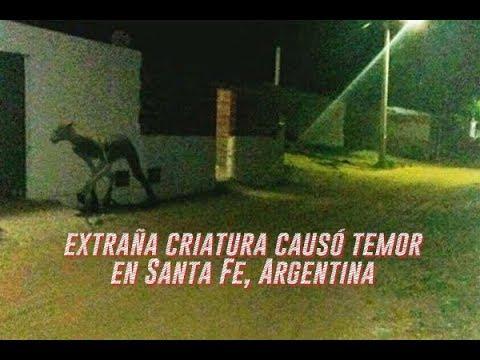 Ésta es la extraña criatura que causó temor en Santa Fe, Argentina 2018