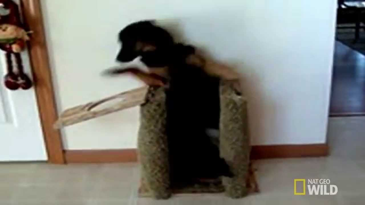 This Man Invented a Lifesaving Chair to Help His Dog to Eat. Totally Brilliant. - YouTube & This Man Invented a Lifesaving Chair to Help His Dog to Eat. Totally ...