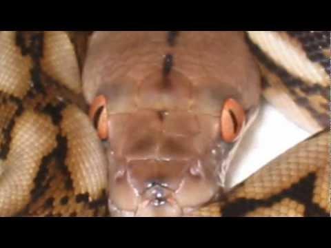 Captive Ectotherm Slideshow
