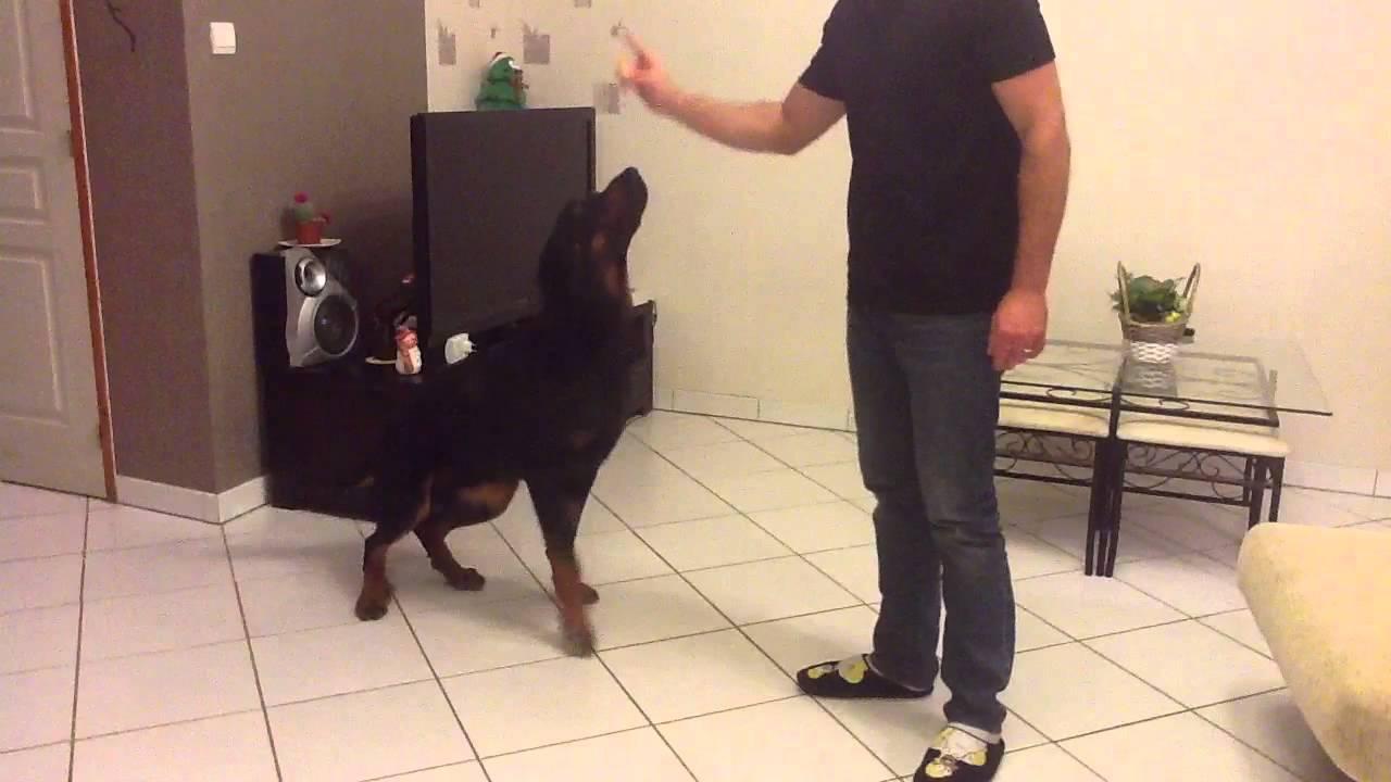 Dresser son chien - Apprendre des ordres de base