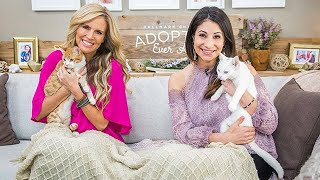 Adoption Ever After - Anime and Sony - Home & Family