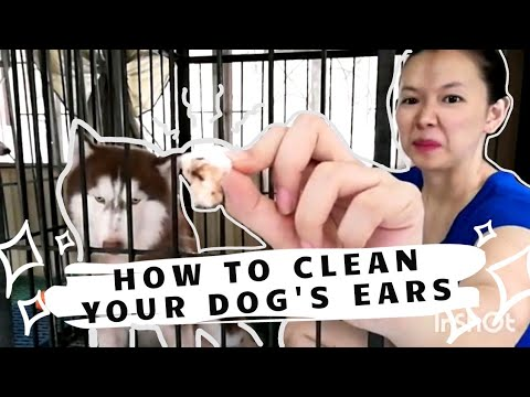 Dog Ear Cleaning 101