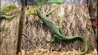 2019 North American Reptile Breeders Conference Tinley Park, IL