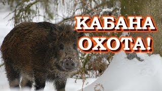 """НОВИНКА"" - Охота с ружьём на КАБАНА - видео в лесу"